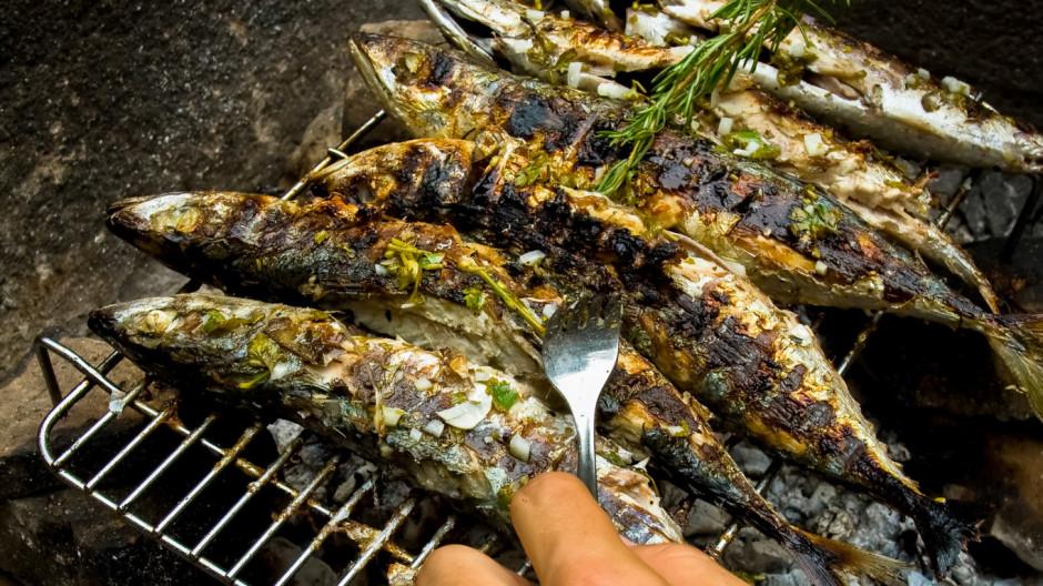 croatia-travel-service-fish-04